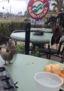 birds love corn chips?